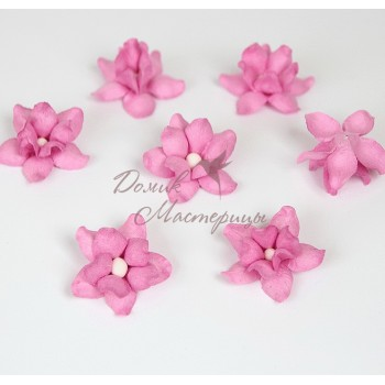 Фиалка розовая, 118