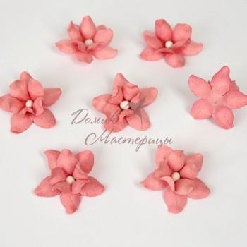 Фиалка,розово персиковая