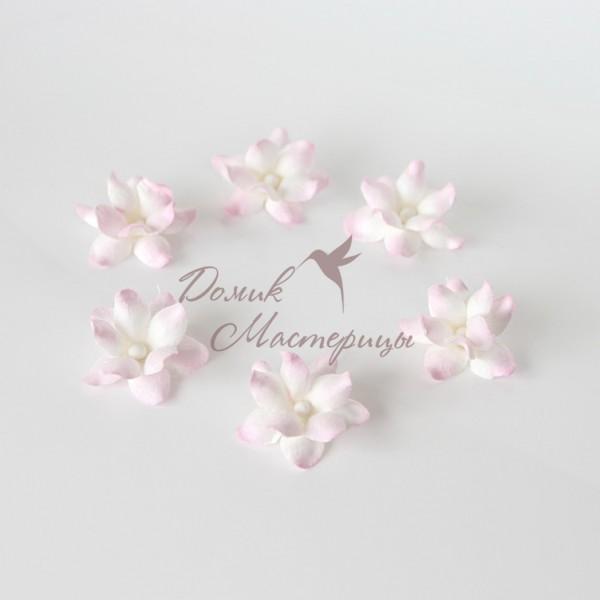 Фиалка, белая с розовым краем 519