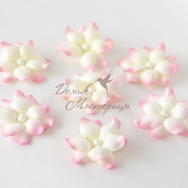 Фиалка, молочная со светло розовыми краями лепестков 525