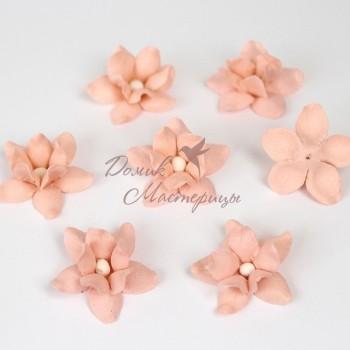 Фиалка, розово персиковая, 123